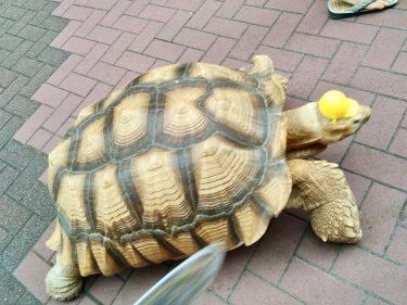 長寿と幸運のシンボル「亀」に出会える、東京ぶらりお散歩スポット