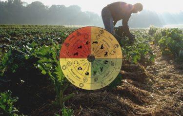 オーガニックの進化系?化粧品、ワイン、食品etc.に広がる「バイオダイナミック農法」の今